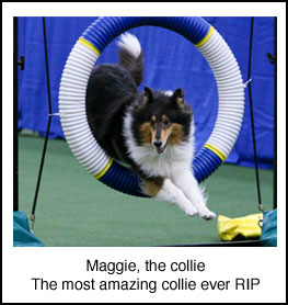 Maggie, the collie RIP